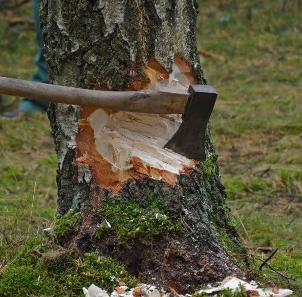How to Chop Down a Tree with an Axe